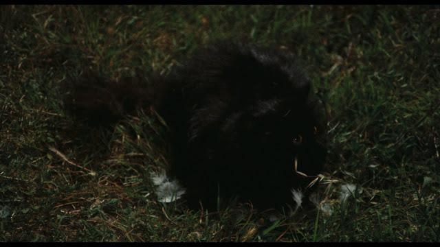 Your Vice Black Cat